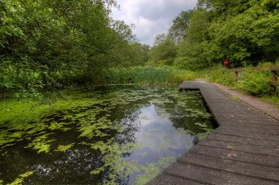 image of pond and woodland at Withnell Fold Nature Reserve